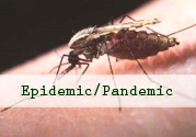 Close up of a mosquito on skin - Epidemic / Pandemic